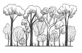 Simple profile diagram of mature brigalow (Acacia harpophylla) forest - by Paula Peeters