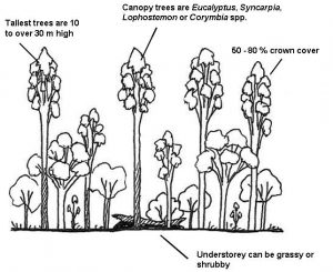 Simple profile diagram of wet sclerophyll forest in south-east Queensland - by Paula Peeters