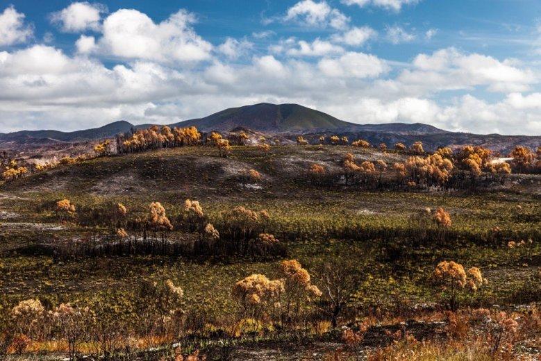 Dempster Plains - fire regeneration near Mt Hazelton- by Nicole Anderson