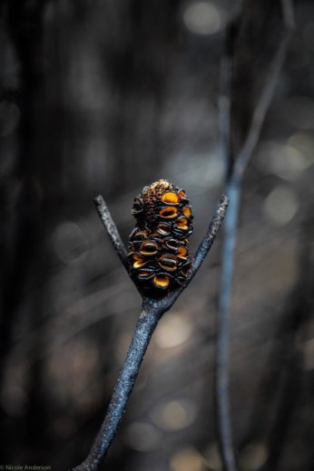 Wuthering Heights - Banksia relishing the chance to now cast a new generation- by Nicole Anderson