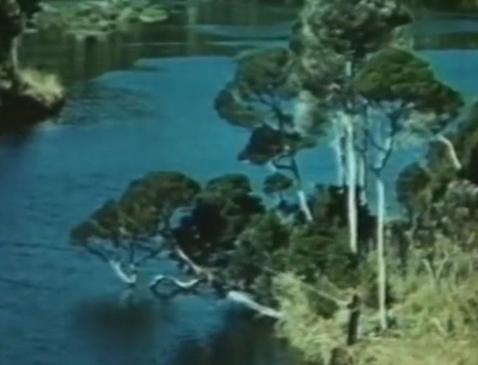 Gateway to Charm (1955 Northwest Tasmanian Tourism) -40