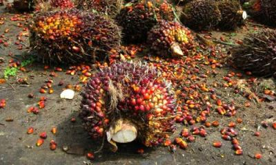 Commerce Ministry tackles oil palm pricing