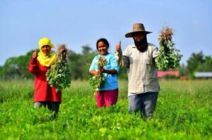 Agriculture Ministry's survey: Farmers earn more income