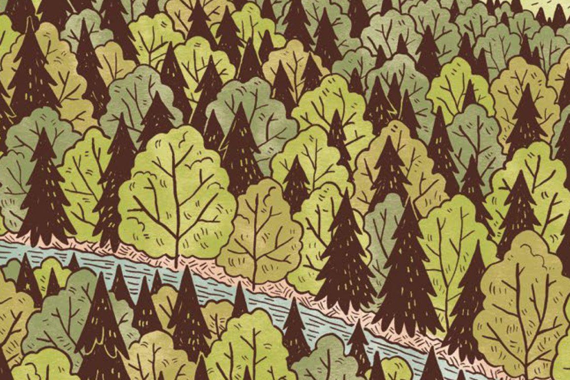 Pilu of the Woods