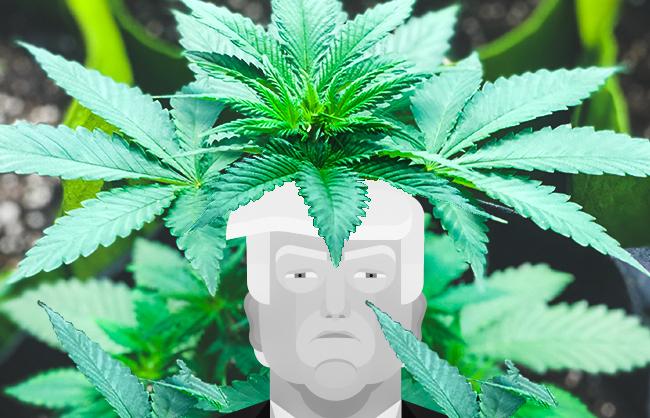 strain-clone-Trump