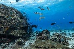 Fregate Island - Copyright Blancpain, Daniel Bichsel