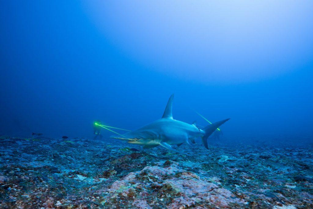 Blancpain Ocean Commitment Partnerships