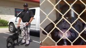 local-cops-save-pitbulls