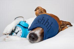 Dog sleeping with alarm clock and sleeping mask