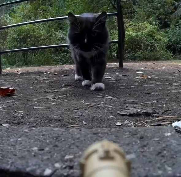 tank_vs_cat_square