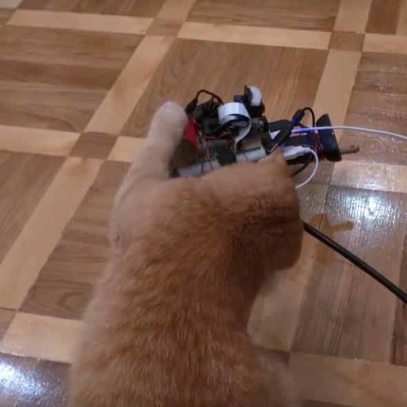 Cat_attack_tank