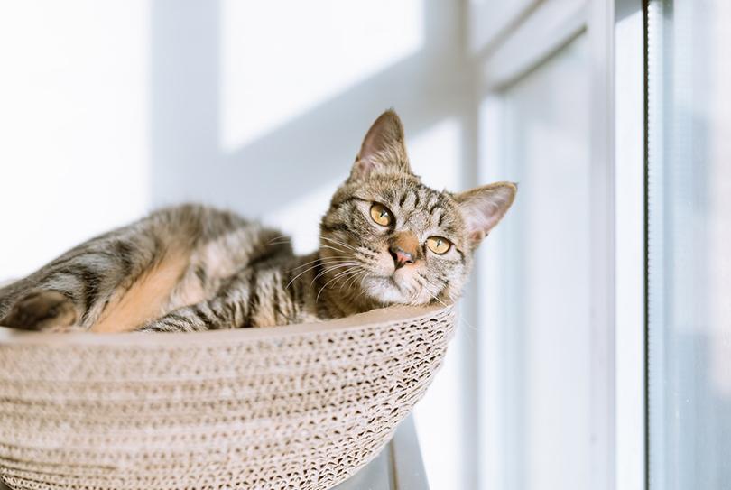 貓行為諮詢師:貓的行為就像一面鏡子。會映照出主人的潛在問題 - 人物特寫 - 人物 - Cheers快樂工作人