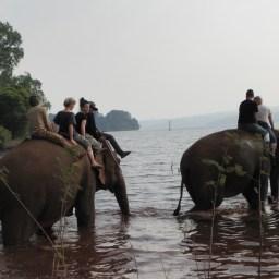 C'est l'heure de la baignade des éléphants