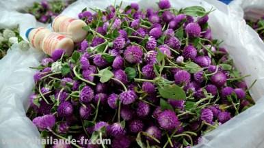 flowermarket20141116_025