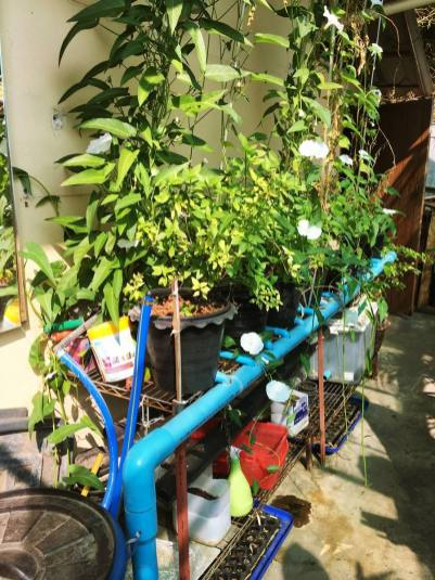 Cool guest-house, ChiangMai