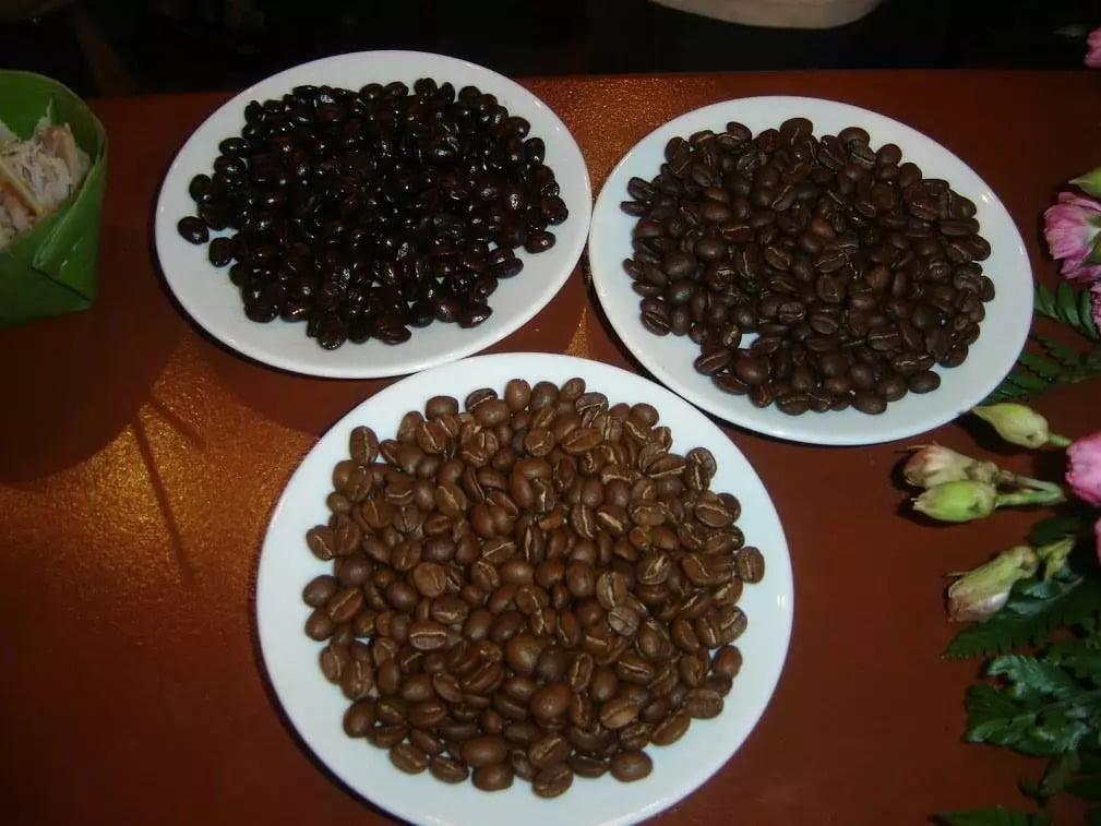 À la recherche des meilleurs grains de café de Thaïlande