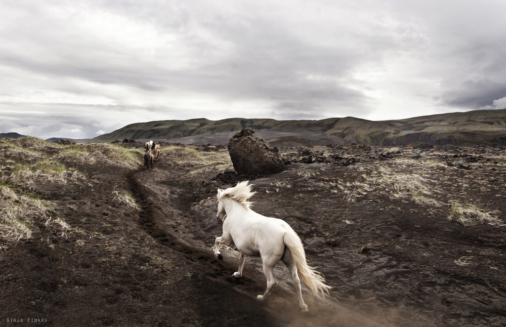 beautiful-horse-horses-landscape-nature-Favim.com-318416