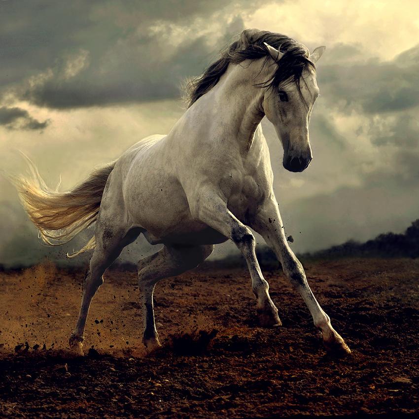 Horses-beautiful-nature-23477255-850-850