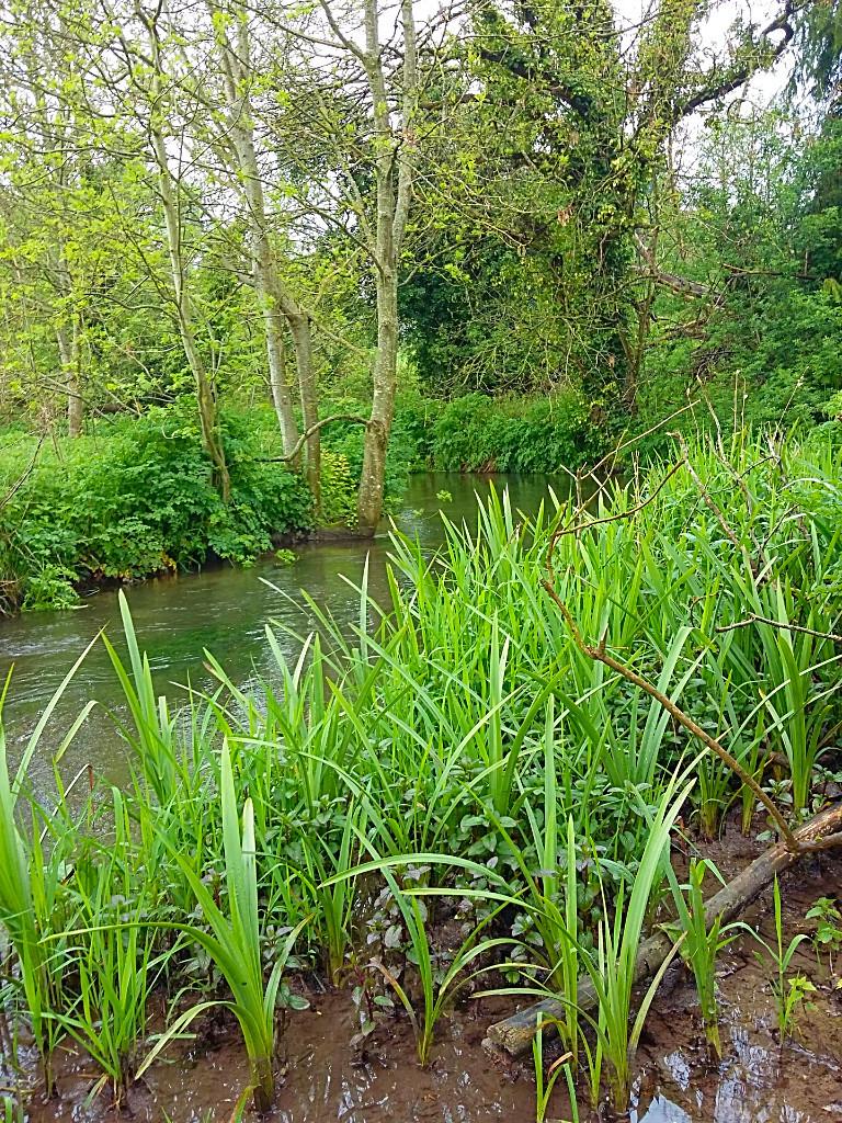 meadow-life-green