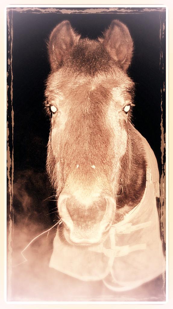 Winter-ponies-xx-014