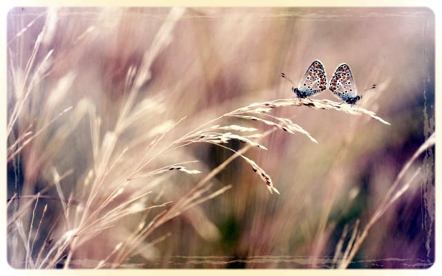 Butterflies-Field-Close-Up-640x400