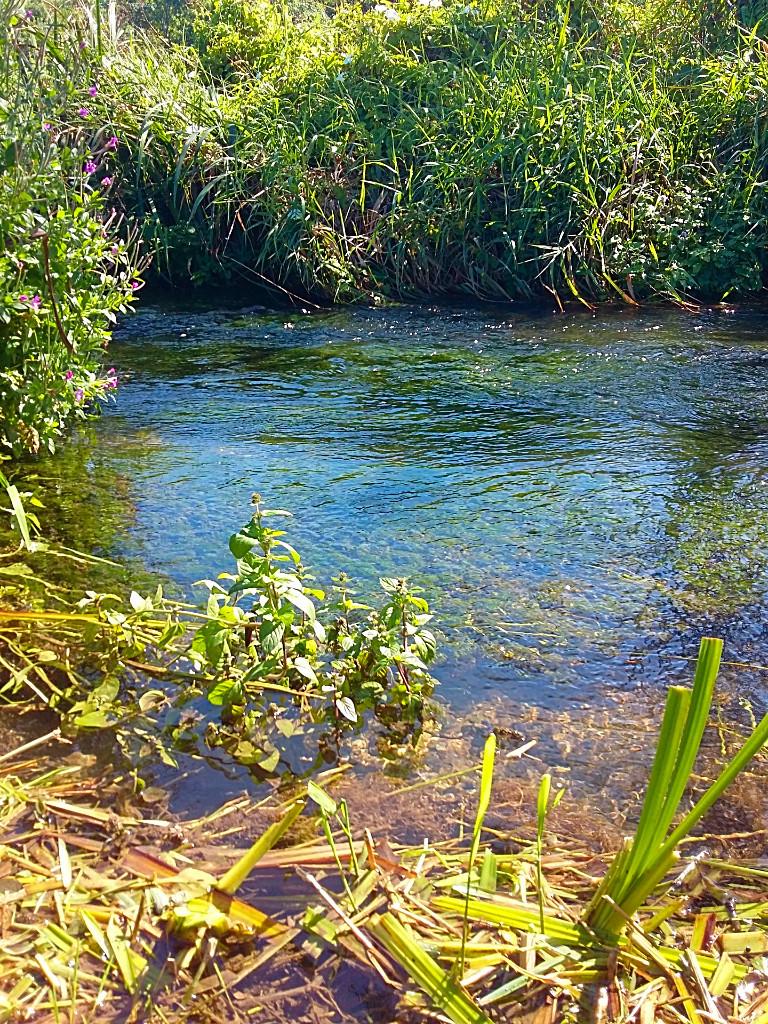 river-life