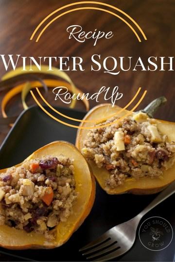 Winter Squash Recipe Round-Up