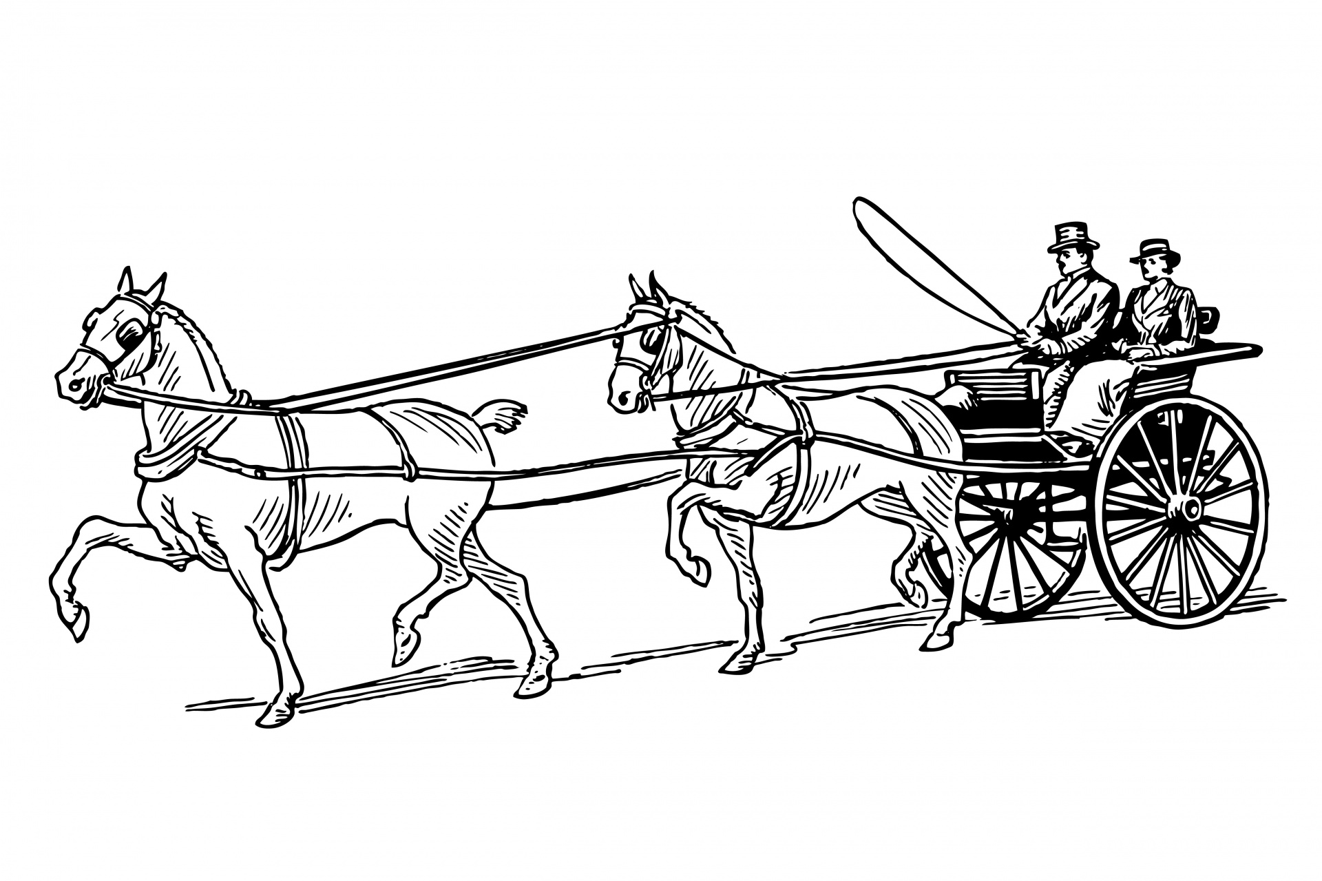 Horse Horses Carriage Buggy Drawn
