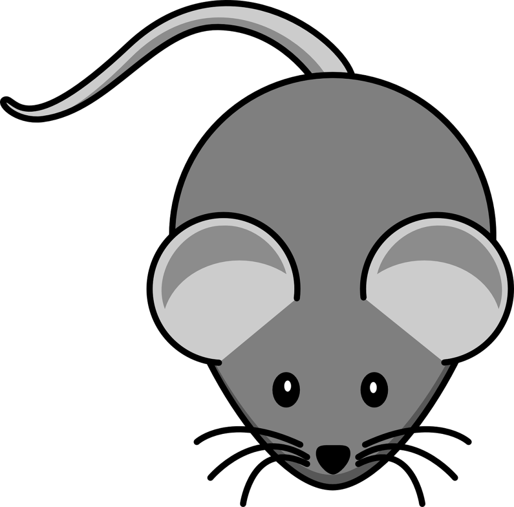 medium resolution of mouse grey animal tail schematic rodent whiskers free vector
