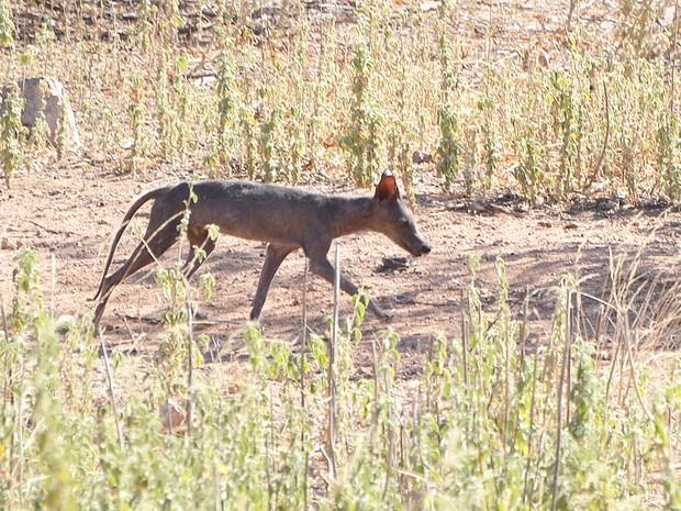 Animal foi visto na região em 2015