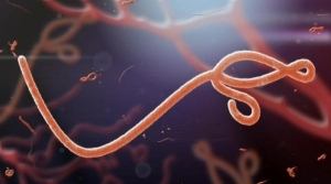 Domain investor sells  Ebola.com for $200,000