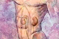 Top Six Bad Habits That Causes Kidney Damages