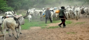 Unrest In Kaduna State Community As Suspected Herdsmen Kill Four, Injure Many