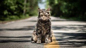 Paramount+'s Pet Sematary Prequel Adds Four Actors