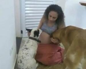 Jealous family dog mauls newborn twin girls to death