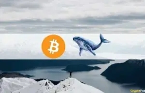 Local-Top Indicators Flash for Bitcoin: 3rd Biggest Whale Sent 3,000 BTC to Coinbase