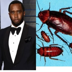 SHOCKING!! How 15 Roaches Motivated American Rapper P Diddy To Become Rich & Famous (See This)