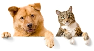 Dog or Cat – Which Pet Is Better To Have??