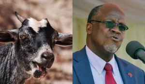 Goat, Pawpaw Test Positive For Coronavirus, President Orders Probe On COVID-19 Test Kits