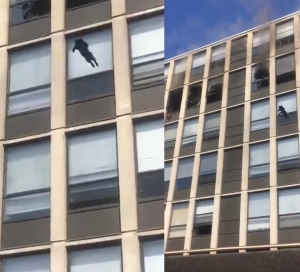 Cat leaps from 5th floor of burning building in Chicago and survives (video)