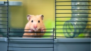 Cryptocurrency-Trading Hamster Outperforms Bitcoin, S&P 500 Since June – Bitcoin News