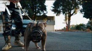 Big Monii – We Go Dey Ok (Video)
