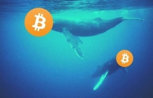Bitcoin Whales Added 60K BTC in a Day: Starting Historically Profitable July