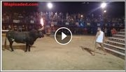 Comedy Video Of The Day: Bull With Fire Equals to Death
