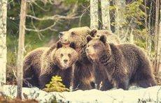 Crypto Markets Dump $200 Billion in Bear-Driven Bloodbath