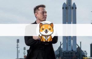 New Baby Doge Skyrockets 90% Following Elon Musk's Latest Tweets