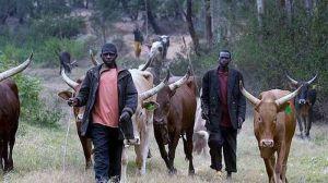 BREAKING!!! Panic In Benue State Community As Suspected Herdsmen Kills 40 In Fresh Attack