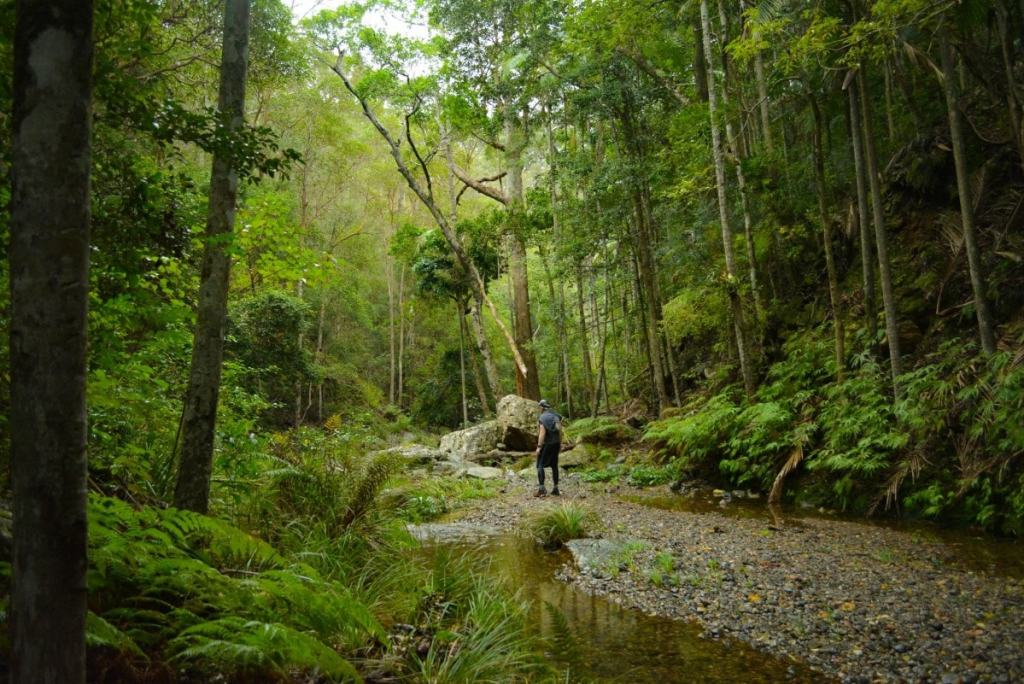 An Adventurous Brisbane Escape // D'Aguilar National Park (QLD), Lisa Owen, Trees, stream, hiker, pebbly beach
