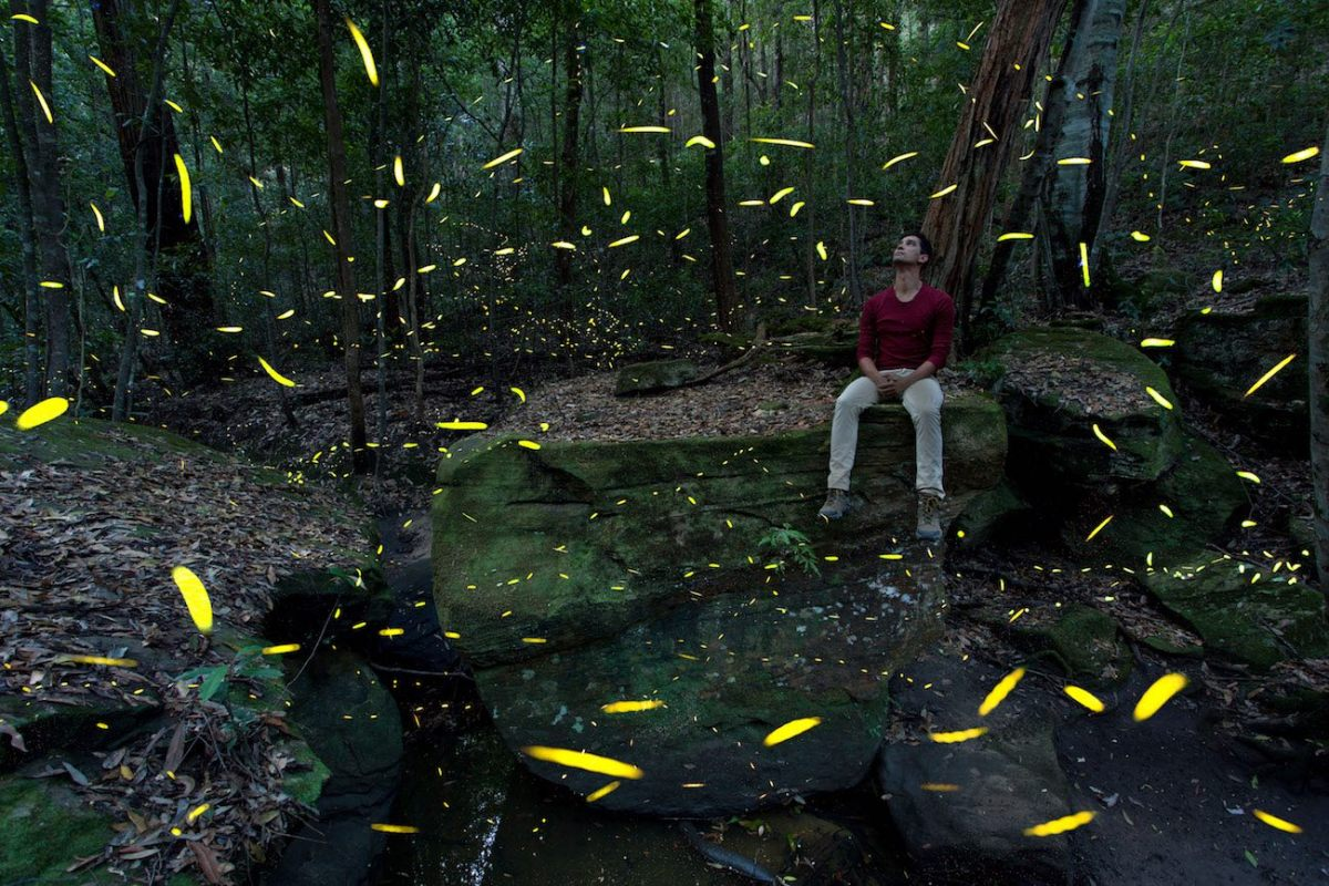 Joel Johnsson, Fireflies Blue Mountains River Rock NSW Joel Johnsson, bugs, long exposure, man, bush