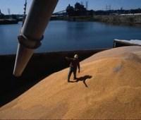 Украина сократила годовой экспорт зерновых до 39 миллионов тонн после рекорда
